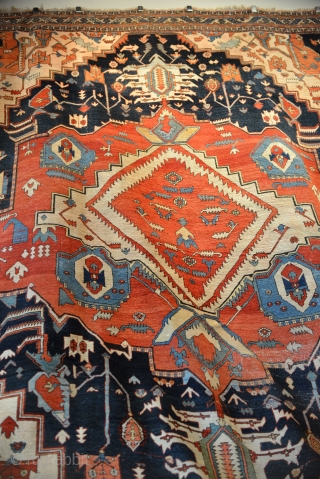 A prominent Southern rug collection on sale and display at the Sarkis Kish Oriental Rug Gallery in Memphis, TN. This collection includes an inscribed Star Kazak, inscribed Serapis, an inscribed Karachoff --  ...