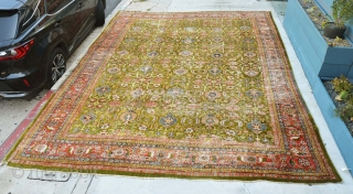 Extremely rare, huge palace size olive green all over design Mahal rug, good condition for its age, some low areas and 2 small holes, easy to repair. Rug is extremely unique, DECORATIVE  ...