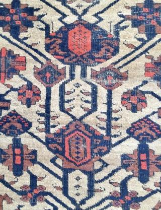 Beluch Carpet